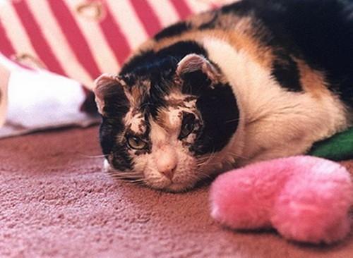 Кошка вынесла всех своих пятерых котят из пожара