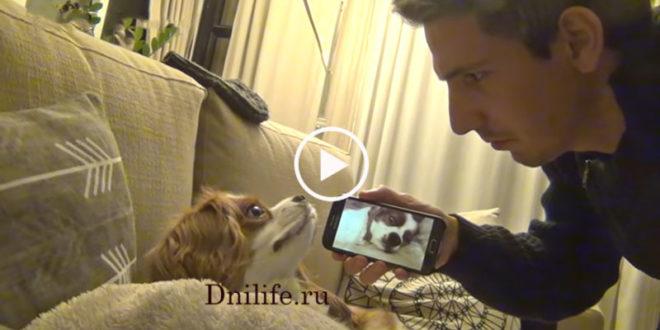 Собака была в шоке! Хозяин снял на камеру ее храп и показал это видео ей