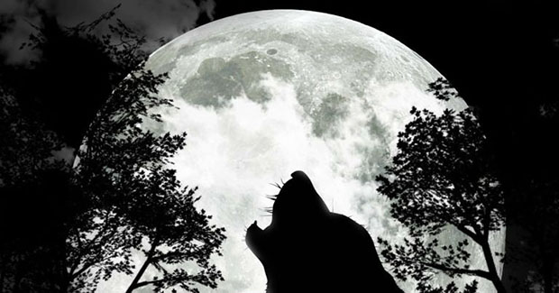 Полнолуние Волка 12 января — особенное! Что нас всех ждет?