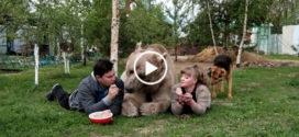 Обычная семья приютила этого огромного медведя и теперь он живет с ними.