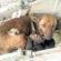 Бездомная собака всю ночь согревала младенца, которого «мать» выбросила на мороз