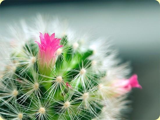 Однажды у молодой женщины расцвел кактус и это незначительное событие повлекло за собой череду совпадений