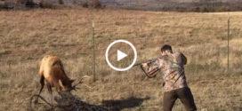 Проходя мимо этот парень увидел попавшего в западню оленя. Тогда он вскинул свое ружье и…