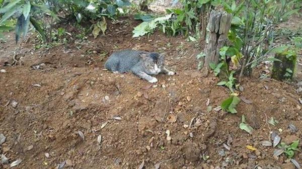 Мужчина оставил немного еды и воды на могиле. То, что он обнаружил на следующий день, лишило его дара речи!