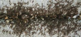 Лучшее средство от муравьев. Просто рассыпьте по углам эту всем известную специю и проблема исчезнет!