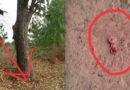 Женщину привлек странный звук, доносящиеся с дерева. То, что она там увидела, повергло ее в шок…