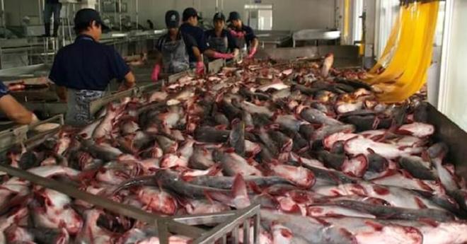ЗАПОМНИТЕ: никогда не покупайте эту рыбу, ведь она очень опасна!