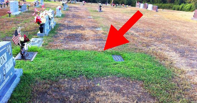 Мать не могла понять, почему трава на могиле ее сына стала зеленой. Когда она узнала причину, то впала в ступор!