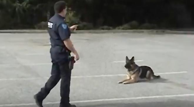 Полицейский сказал псу идти в машину. Что сделал пёс, шокировало всех!