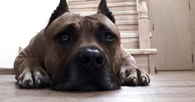 Голодный пес не ел целый час… Его реакция на слова о еде вас рассмешит!