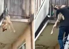 Прохожие спасли истощенную собаку, которая без сил свисала с балкона